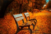 Autumn Park Bench Poster