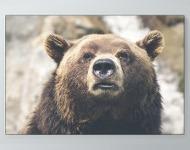 Bear Up Close Poster