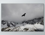 Bird Over The Snow Poster