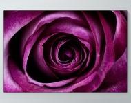Flower Petals Poster