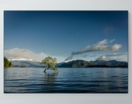 Lone Tree In Water Poster