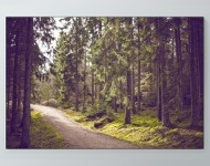 Pathway Through The Woods Poster