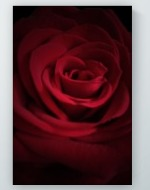 Rose in Shadows Poster