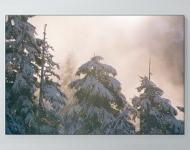 Snow Has Fallen Poster