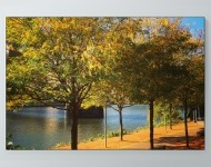 Sunny Fall Day Poster