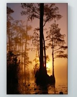 Swamp Sunset Poster