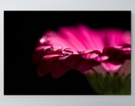 Water Drops On Flower Poster