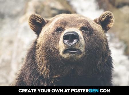 Bear Up Close Print