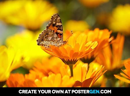 Butterfly Flowers Print