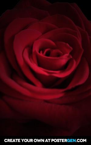Rose in Shadows Print