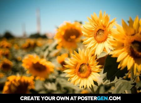 Sunflower Fields Print