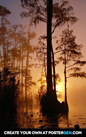 Swamp Sunset Print