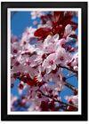 Almond Blossom Print